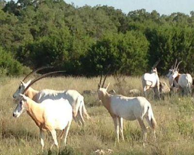 Land For Sale Kerrville, TX | Dominion Lands