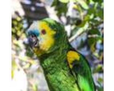 Adopt Kiwi a Amazon