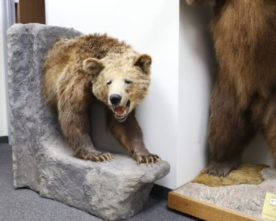 Upcoming Taxidermy Sale