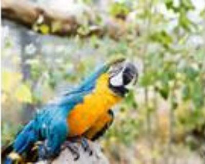 Adopt Houdini a Macaw