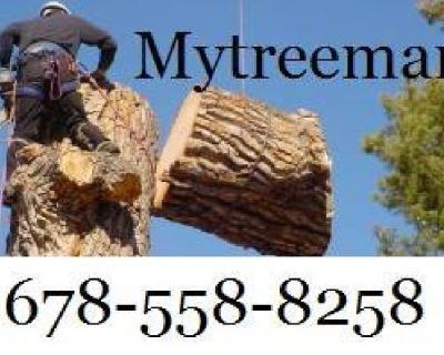 Tree Services TREE SERVICE - TREE REMOVAL - TREE PRUNING