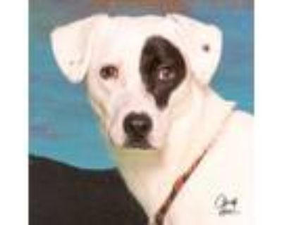 Adopt **Lily Moon** RESCUE CENTER a Jack Russell Terrier, Rat Terrier