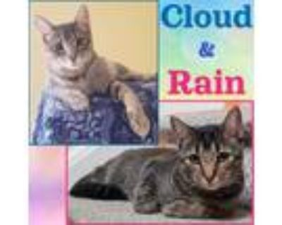 Adopt Mother Nature's Kittens a Domestic Short Hair