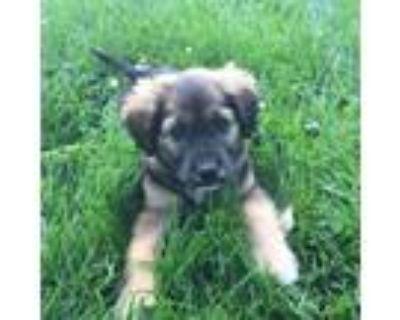 Adopt Cal - No Longer Taking applications a Beagle, Mixed Breed