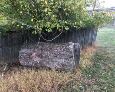Free oak firewood (Bring your chainsaw)