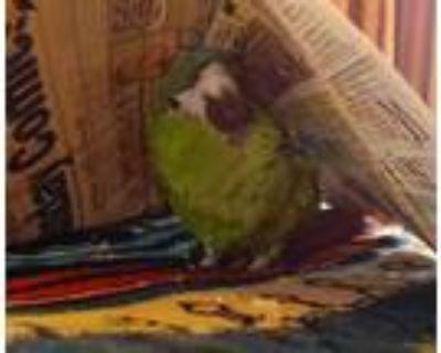 Adopt Fletch a Macaw