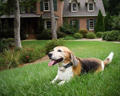 Hidden Dog Fence Erie PA