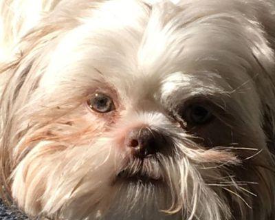 Shih tzu Puppies  Waiting List