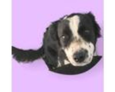 Adopt Zola - adoption hold till 5 pm Thursday a Black Border Collie / Mixed