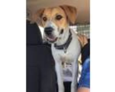 Adopt Marley a Hound (Unknown Type) dog in Windsor, CO (31573955)