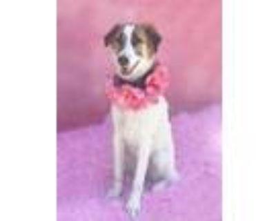 Adopt Lily-ADOPT Me!! a Collie