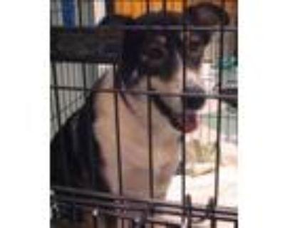 Adopt Ruthie a Siberian Husky