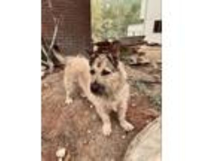 Adopt Badger a Terrier (Unknown Type, Small) / Mixed dog in Heber, UT (32139328)