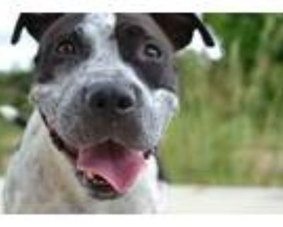 Adopt Magnolia a Black American Pit Bull Terrier / Mixed dog in New Orleans