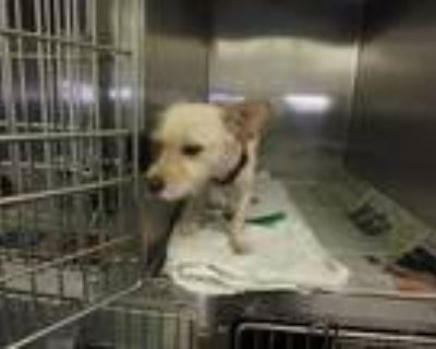 Adopt PERRY a White Mixed Breed (Medium) / Mixed dog in Los Angeles