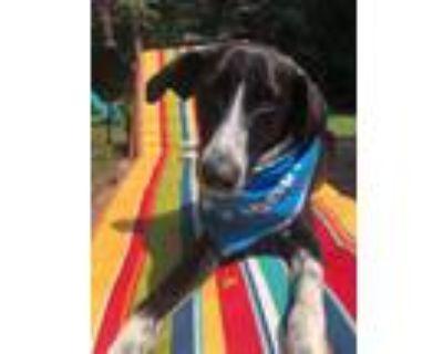 Adopt Luka $400 a Saluki / Mixed dog in Milwaukee, WI (31831061)