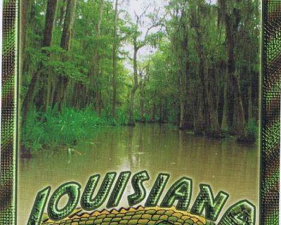Louisiana Swamplands Postcard - Alligators Crocodiles - Unposted