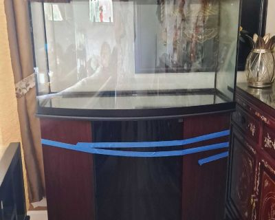 Bow front canopy thick glass fish tank. Complete set up.