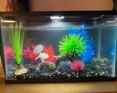Fish tank, accessories and tropical fish flakes