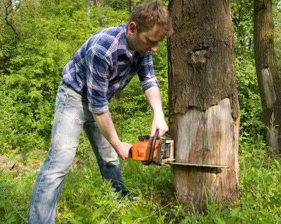 Tree Removal Service in Sioux Falls SD