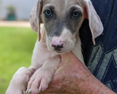 Free Puppy to Good Home (4)