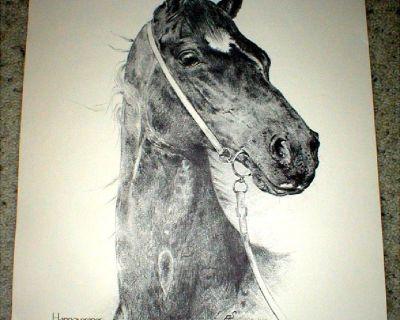 "Horse Print - ""Hannoveraner"" - Signed & Numbered - Limited Ed"