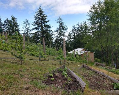 Romantic Cabin w/Hot Tub, on Mt. Constitution, walking distance to Moran St Park - Rosario