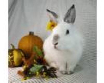 Adopt JULY a Bunny Rabbit