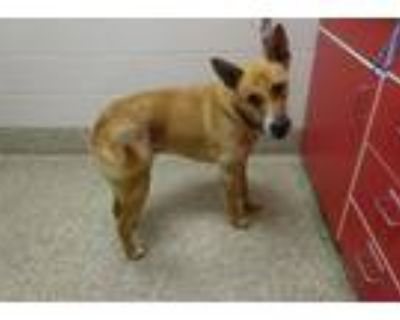 Adopt JAGER a German Shepherd Dog, Labrador Retriever