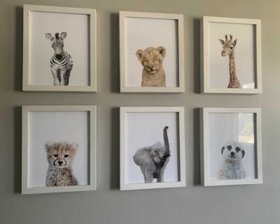 6 8x10 Baby animal pictures