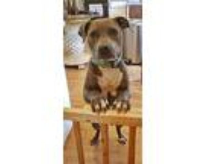 Evie, Staffordshire Bull Terrier For Adoption In Mobile, Alabama