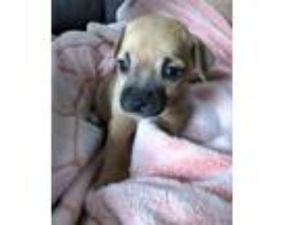 Adopt Merry a Terrier