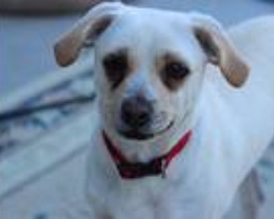Russo, Terrier (unknown Type, Medium) For Adoption In Creston, California