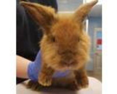 Adopt Peewee ADOPTED a Bunny Rabbit