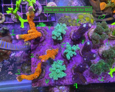 SPS and UC Grim Reaper Zoas F/S
