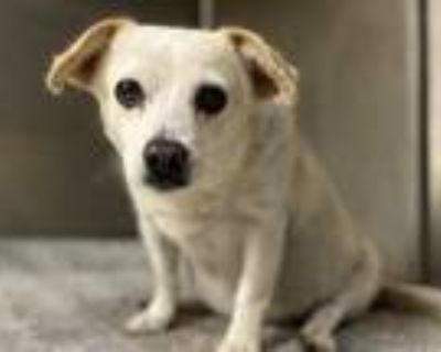 Adopt TIBBY a White Mixed Breed (Medium) / Mixed dog in Los Angeles