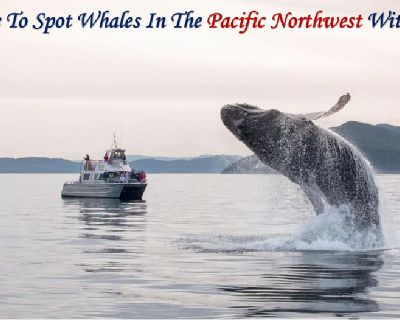 Its Time To Spot Whales In The Pacific Northwest With SYCD