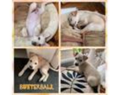 Adopt Butterball a Mixed Breed