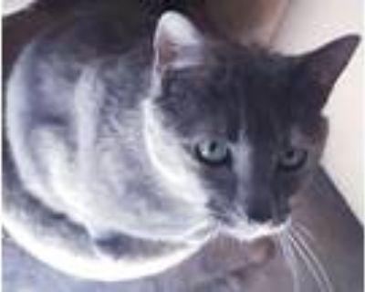 Adopt Sparkles a Tortoiseshell American Shorthair (medium coat) cat in Palmdale