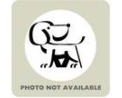 Adopt 47590222 a Black Blue Heeler / Terrier (Unknown Type