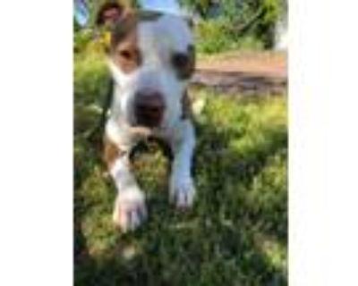 Adopt Marley a Terrier