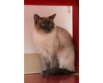 Adopt Working Cat - Reyna a Domestic Shorthair / Mixed cat in Albuquerque