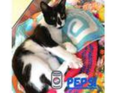 Adopt PEPSI a White (Mostly) Domestic Shorthair / Mixed (short coat) cat in Fort