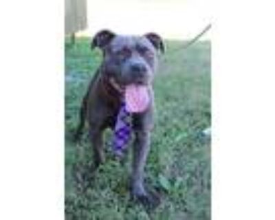 Trent, Terrier (unknown Type, Medium) For Adoption In Abbeville, Louisiana