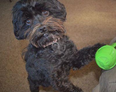 Dog Groomer wanted