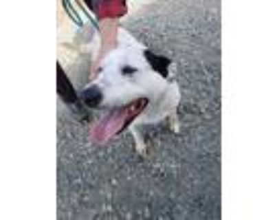 Adopt Sadie a White - with Black Mixed Breed (Medium) / Mixed dog in Henderson