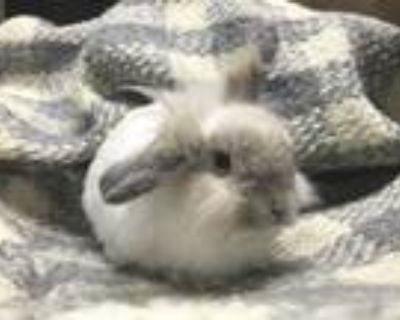 Adopt PUNCH a American Fuzzy Lop