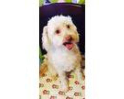 Freddy, Terrier (unknown Type, Medium) For Adoption In Littlerock - Near