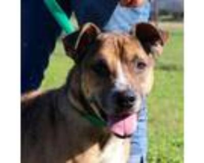 Adopt Marriott JuM* a Shepherd (Unknown Type) / Mixed Breed (Large) / Mixed dog