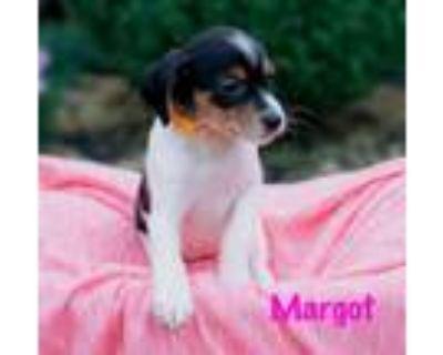 Adopt Margot a Hound